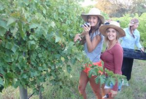 McLaren Vale Backpackers - Stayed