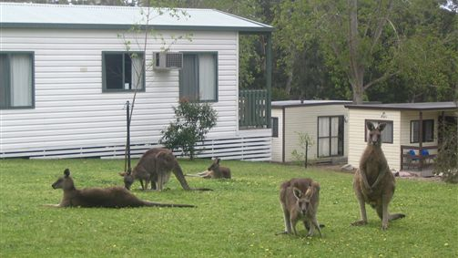 Halls Gap Caravan Park - Stayed