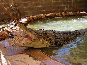 Wyndham Zoological Gardens and Crocodile Park - Stayed