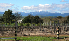 Buller View Wines - Stayed