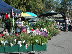 Meadows Monthly Market - Stayed