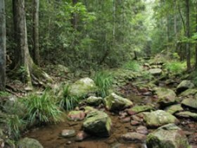 Amamoor State Forest - Stayed
