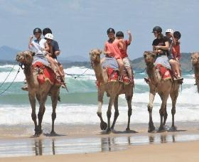 Camel Rides with Coffs Coast Camels - Stayed