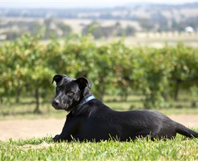 Moothi Estate Vineyard and Cellar Door - Stayed
