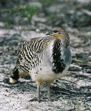 Yongergnow Australian Malleefowl Centre - Stayed