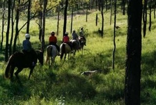 Hunter Valley Horse Riding and Adventures - Stayed