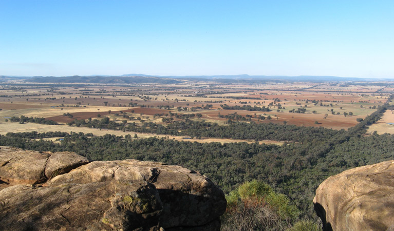 Basin Gully to Eualdrie lookout track - Stayed