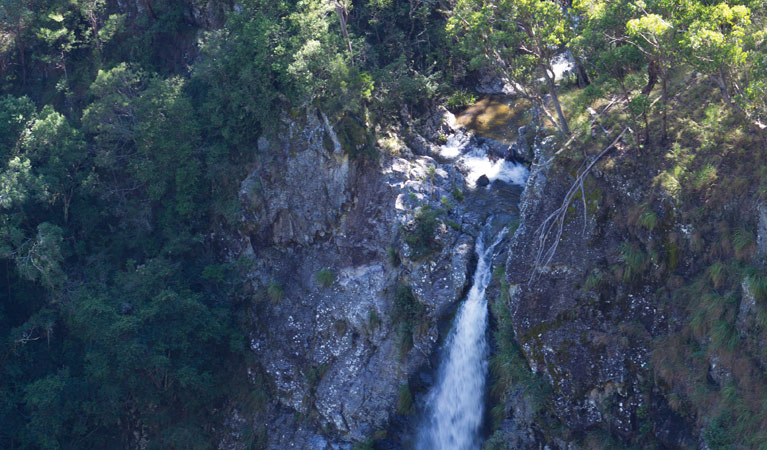 Lyrebird Falls walking track