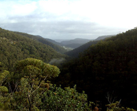 Nattai Gorge Lookout - Stayed