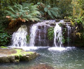 Barrington Tops National Park Walks - Stayed
