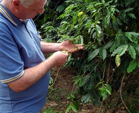 Wombah Coffee Plantation - Stayed