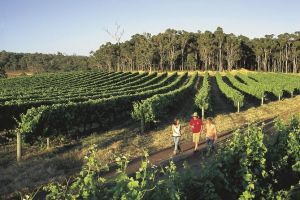 Margaret River Caves Wine and Cape Leeuwin Lighthouse Tour from Perth - Stayed