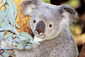 Perth Zoo General Entry Ticket and Sightseeing Cruise - Stayed