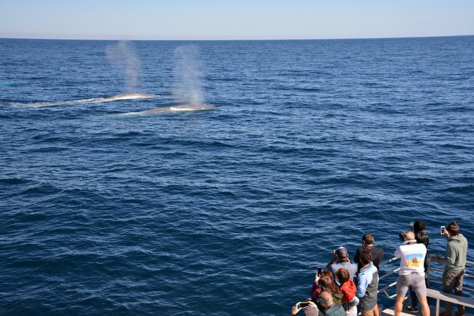Blue Whale Perth Canyon Expedition - Stayed