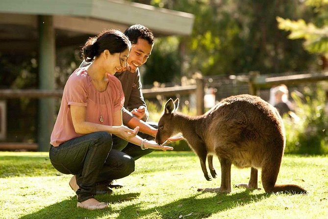 Very Best of Perth Tour - Wildlife Park  City Highlights Tour - Stayed