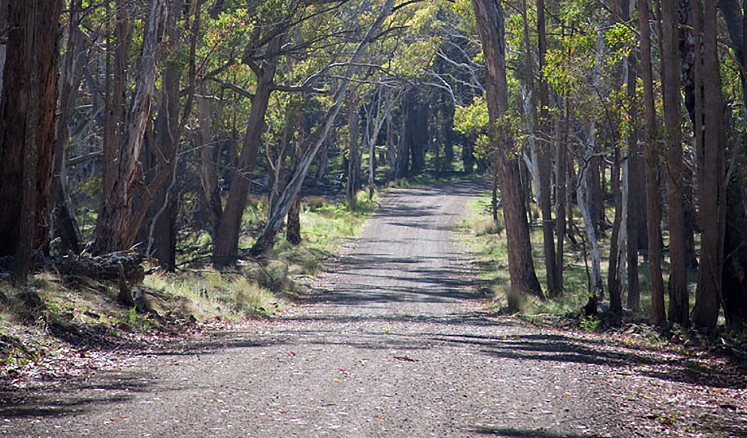 Coolah Tops National Park - Stayed