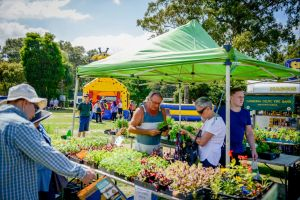 Huskisson Market - Stayed